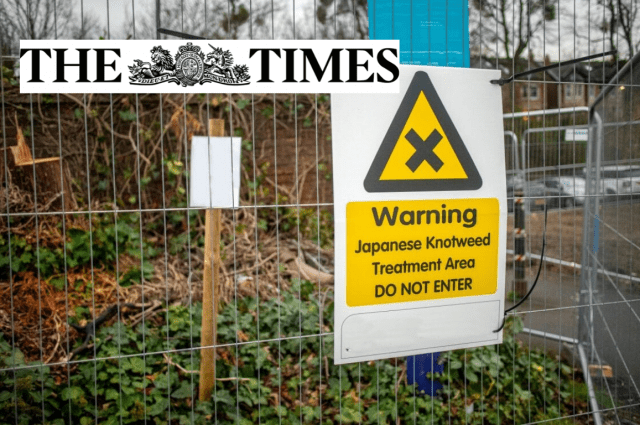 times cel solicitors japanese knotweed